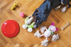 dog chewing on toys when left alone