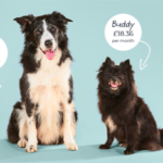 best dog food is much cheaper than you think